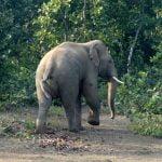 Elephants from Dalma Sanctuary in Jharkhand entered Jadibali forests at Nilgiri in Balasore
